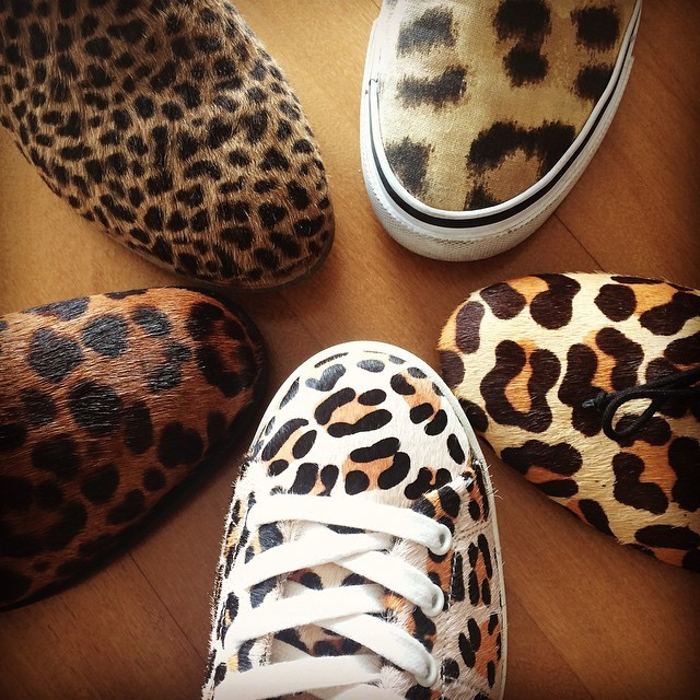 leopard_n.jpg