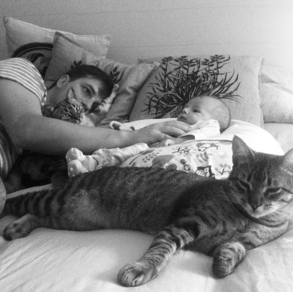 bebes_e_gatos.png