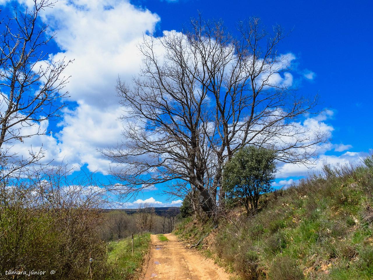 18.- 2016 - Camino del Salvador-1ª etapa (323).jp