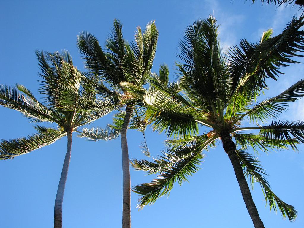 hawaii_vacation_2010.jpg