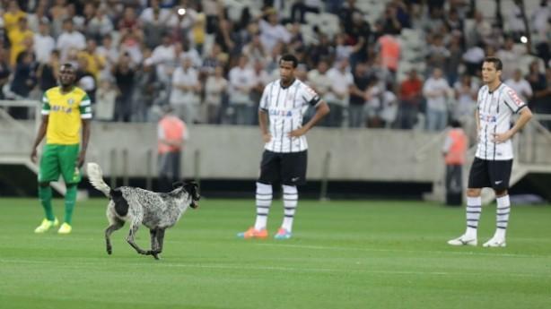 cachorro_invadiu_o_campo_durante_a_partida_entre_c