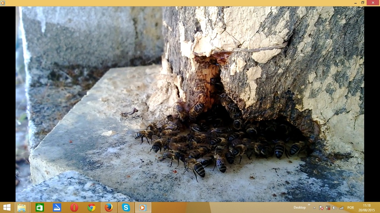 mybees1.jpg