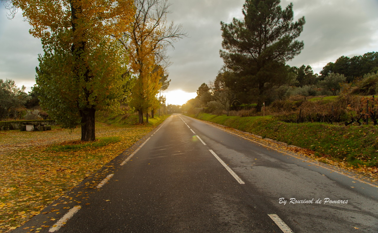 Outono no Fiolhoso (0010).JPG