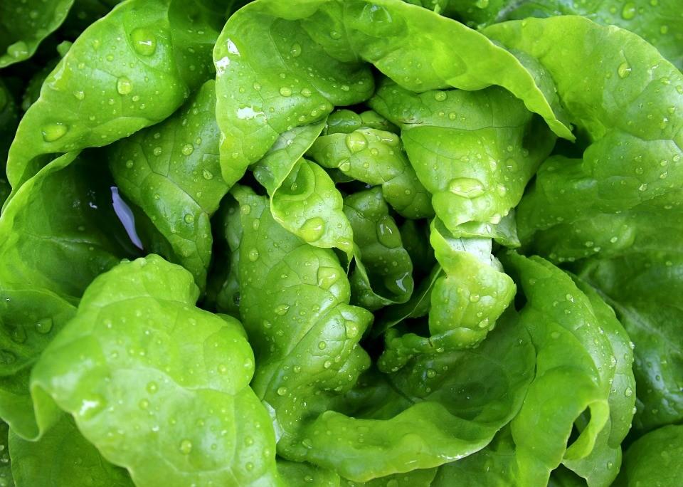 salad-771056_960_720.jpg