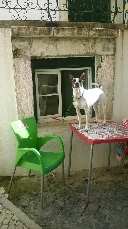 Alfama - Cão Fadista (2).jpg