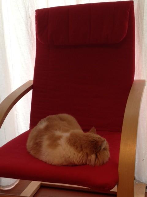 foto cat.JPG