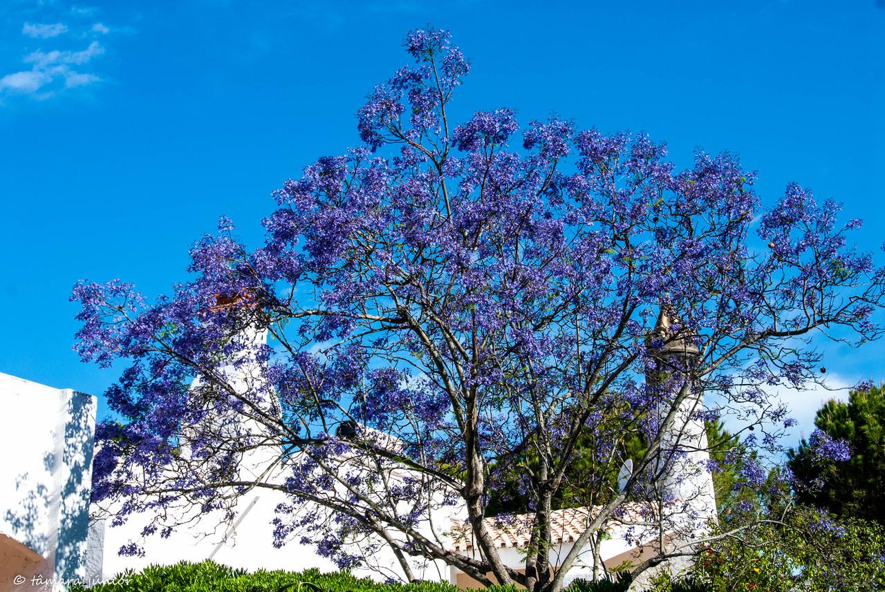 2012 - Algarve (Açoteias+Praia Grande-Lagoa Salga
