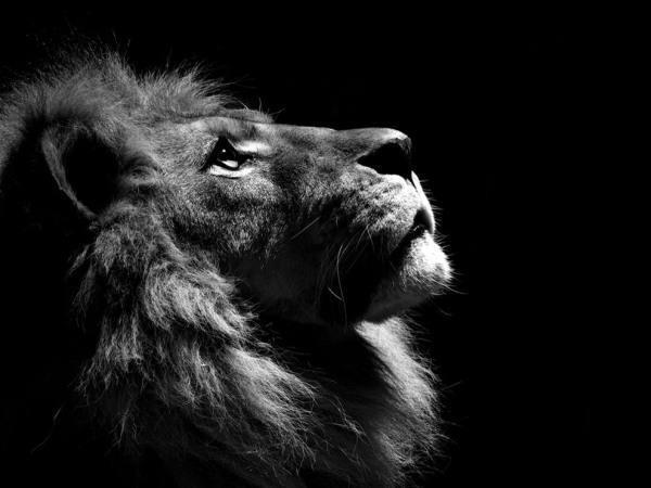 Leão!!![1].jpg