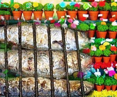 sardinhas e manjericos.jpg