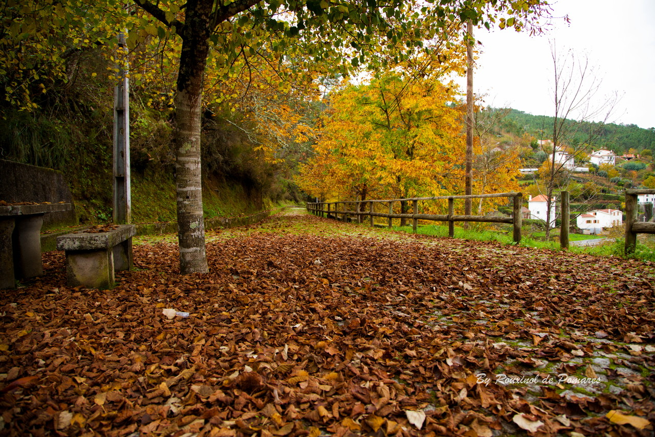 Outono em Pomares (5).JPG