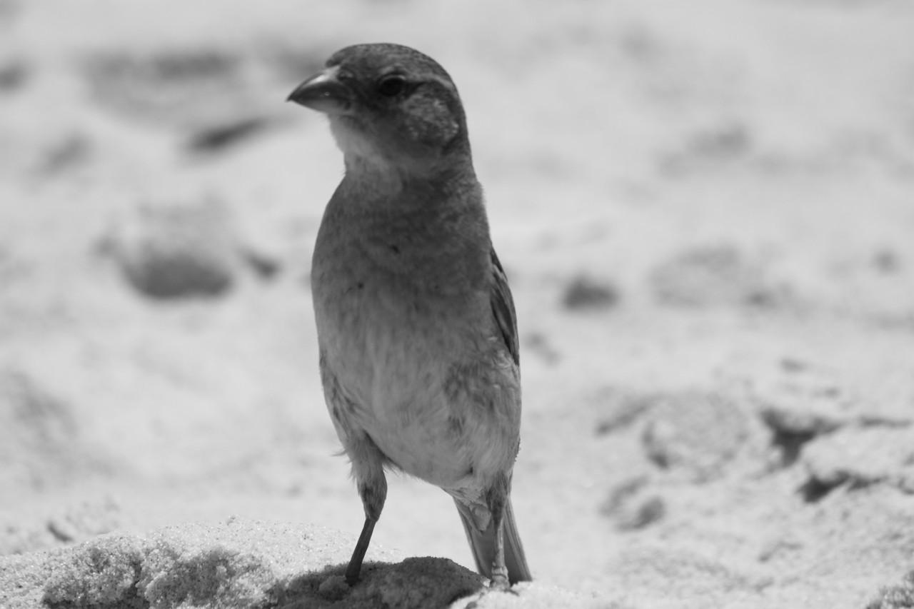 N.º 7302 — Praia do Barril © 2015