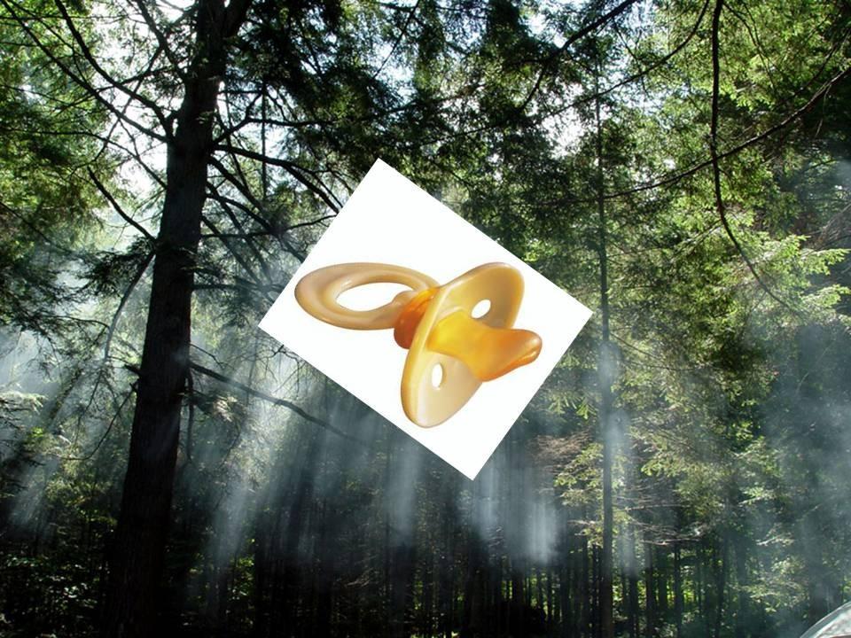 floresta com chucha.jpg