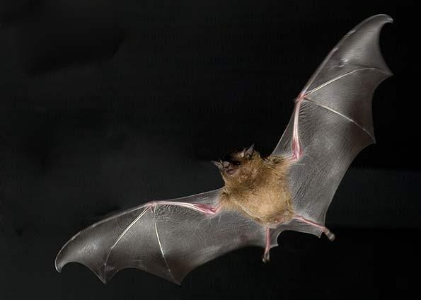livrando-se-dos-morcegos-1.jpg
