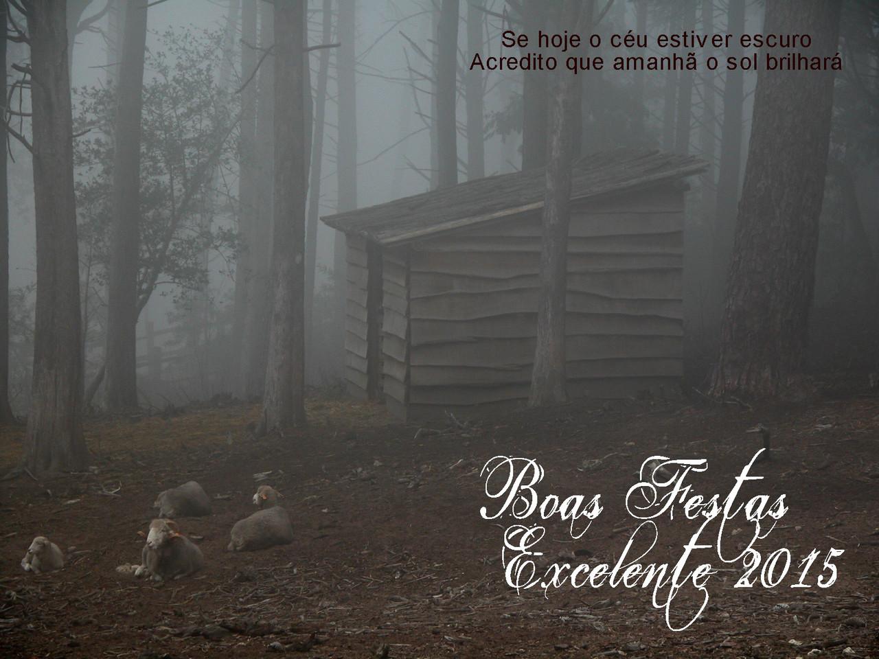 BoasFestas2014e15Estupefacto.jpg
