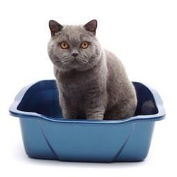 Caixa do gato