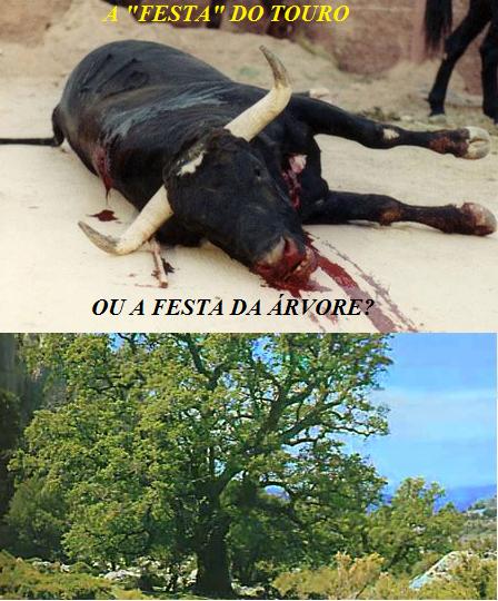 TOURO OU ÁRVORE.png