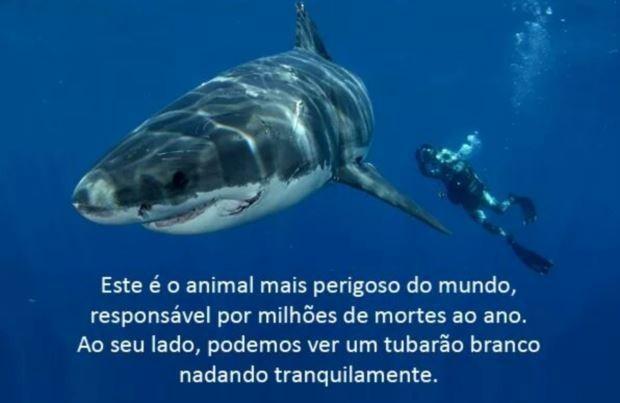 Tubarão.jpeg