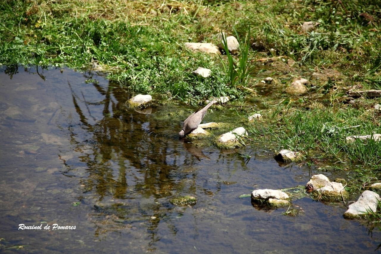 Limpeza da Ribeira das Jardas (0025)