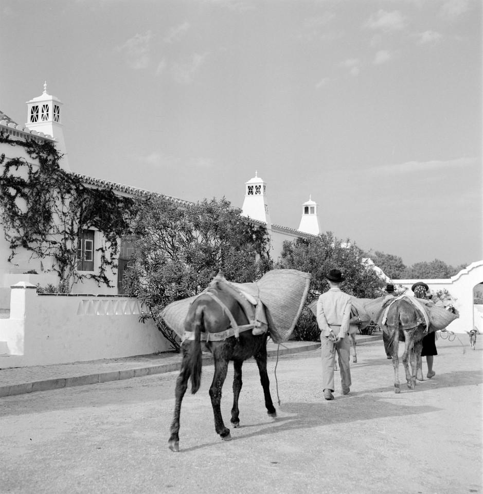 Arre burro!, Algarve (A. Pastor, s.d.)