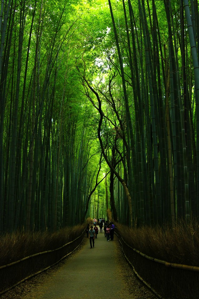 Bamboo-Forests.jpg