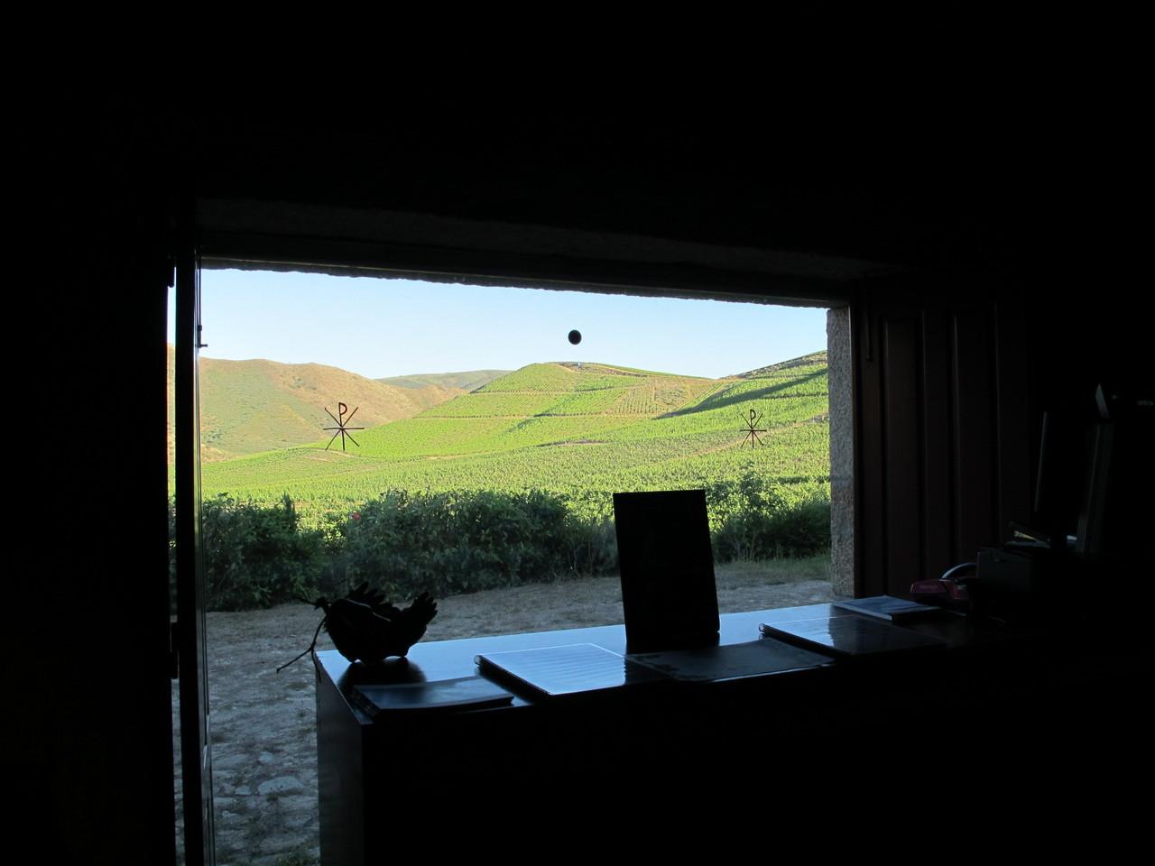 janelas para a vinha