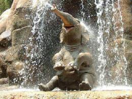 cute-baby-elephant-5.jpg