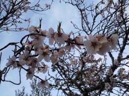 Foto1928. ramo com flores jpg