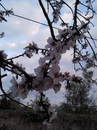 Foto1930. ramos floridos. Foto de DAPL jpg