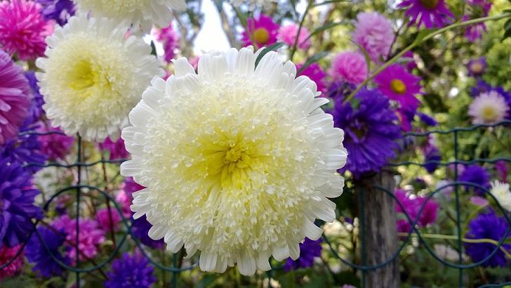 flowers flores jardim2015.jpg