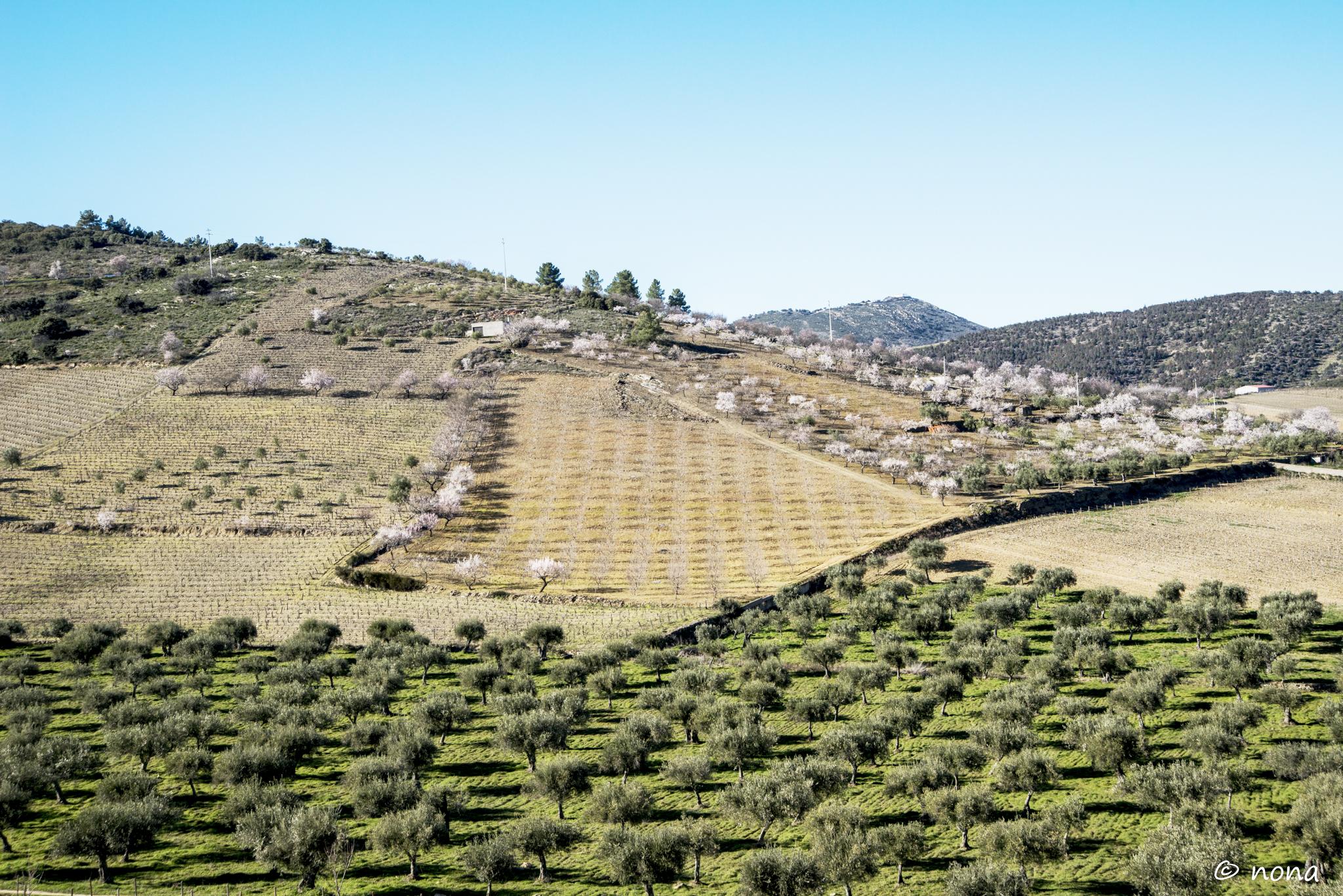 2015 - Rota das Amendoeiras (350).jpg