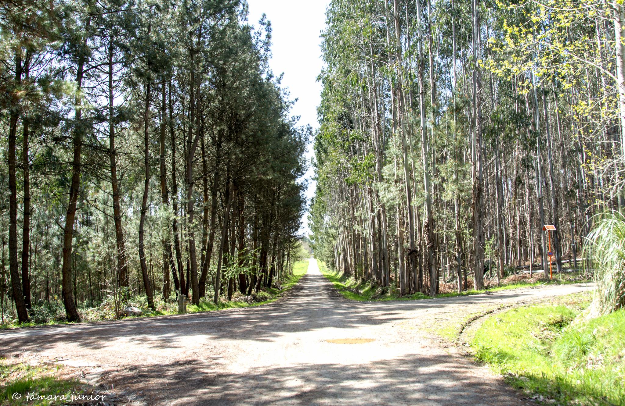 2014 - CIS - 5ª etapa - Bruma-Sigueiro (412).jpg