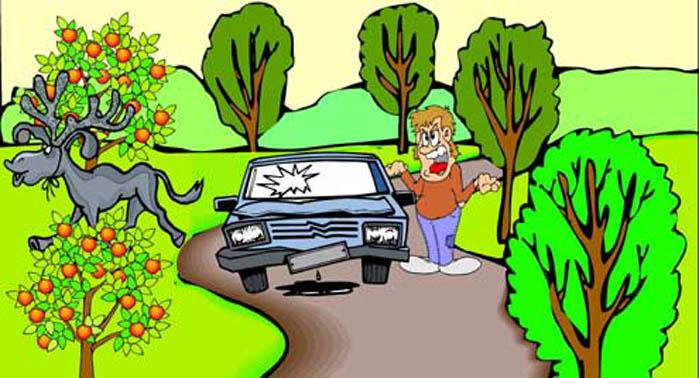 20101006_moose_vs_car.jpg