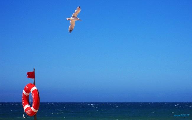 seagull 09 vr.jpg