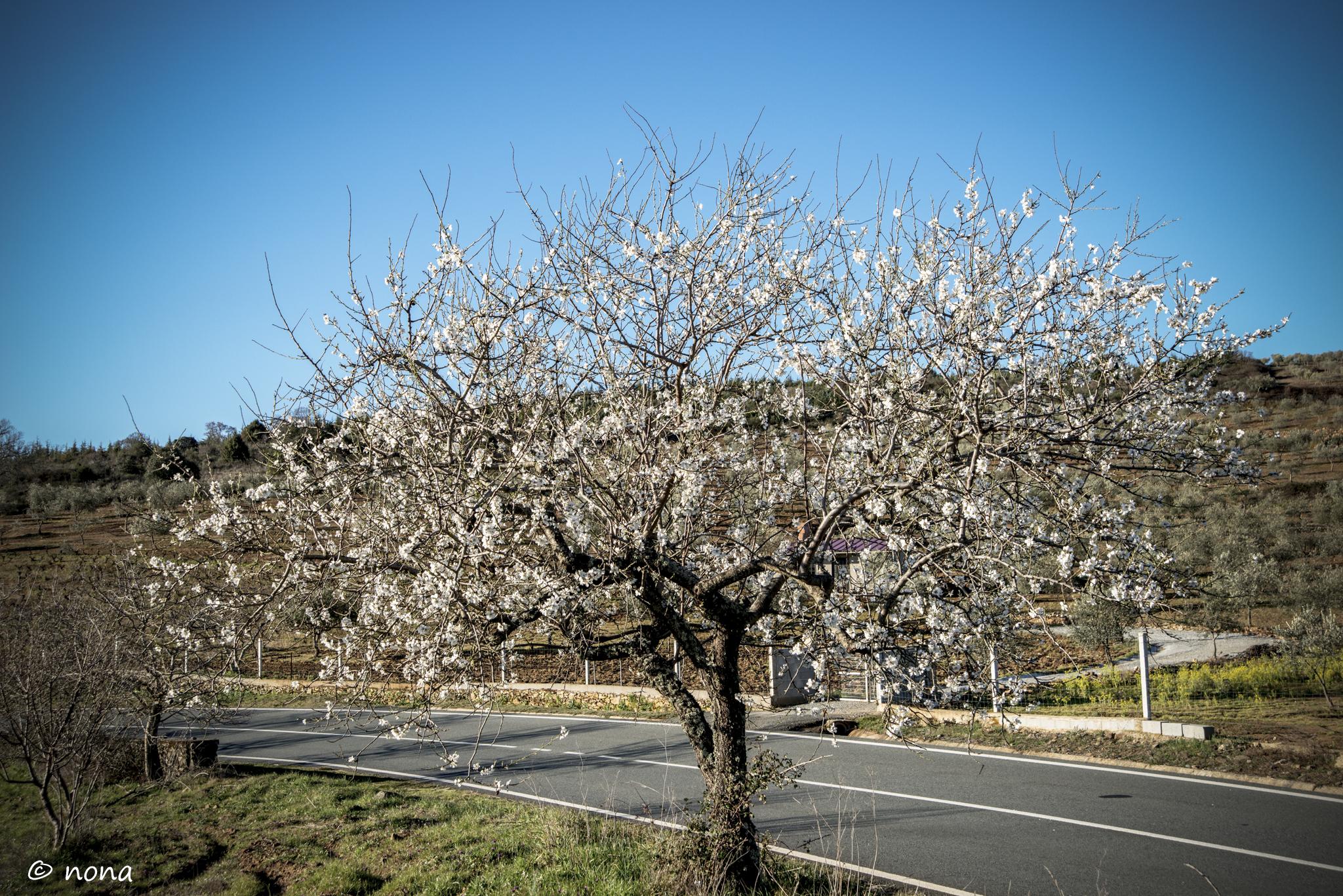 2015 - Rota das Amendoeiras (3).jpg