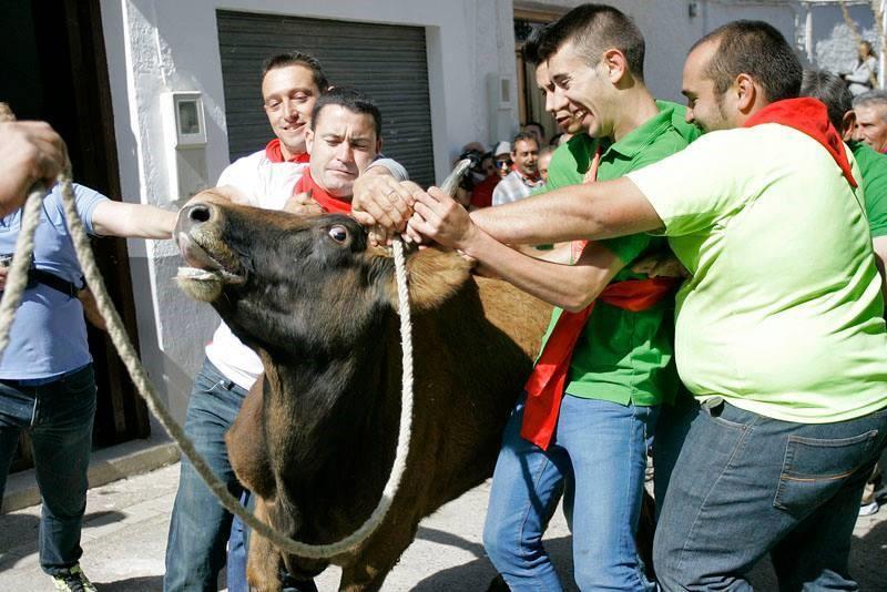 Vaca das Cordas2.jpg
