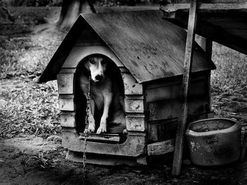 cachorro-na-casinha CÃO.jpg