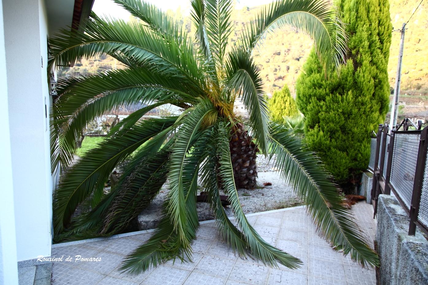 A Morte de Uma Palmeira (4)