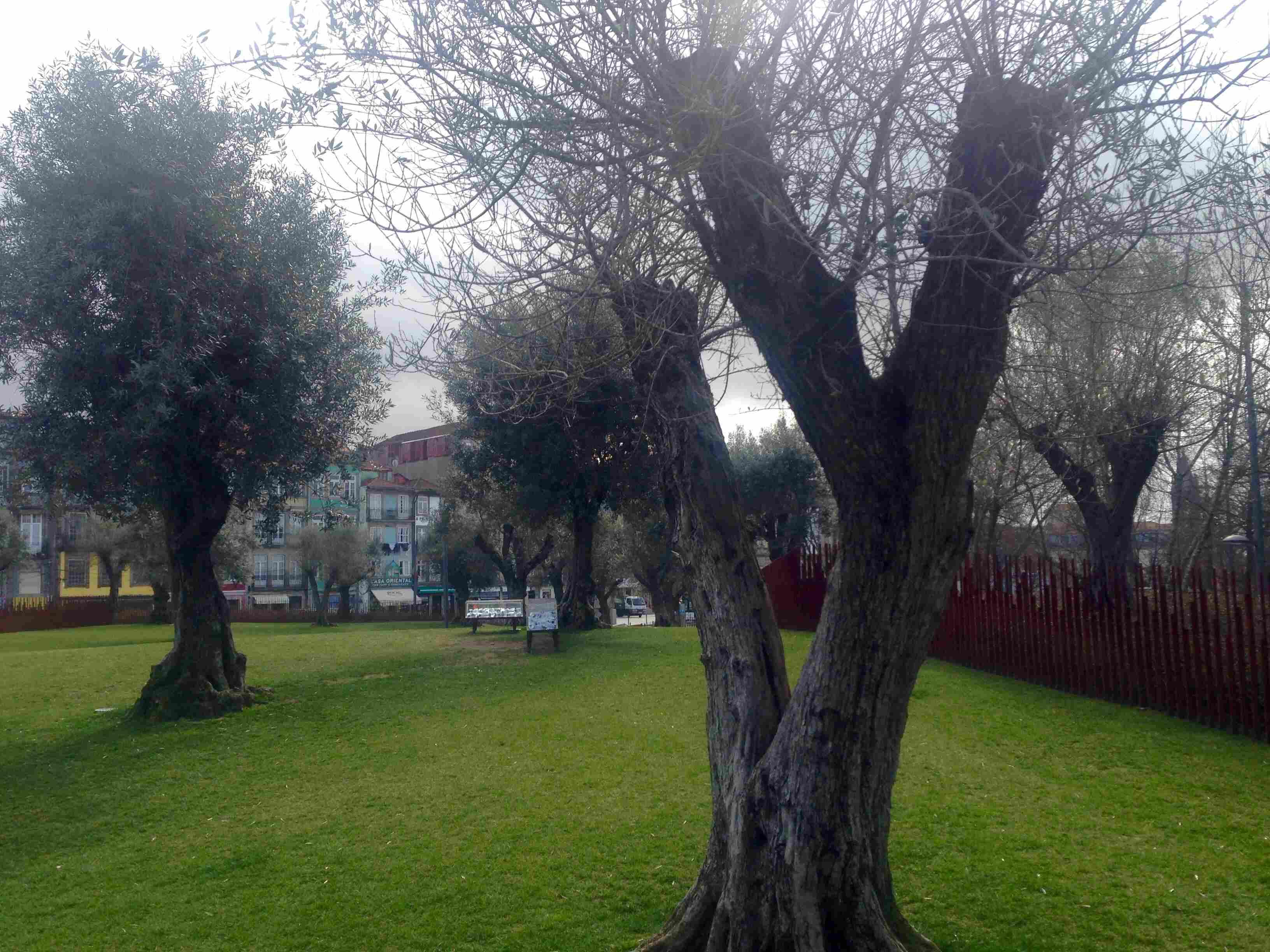 jardim das oliveiras.jpg