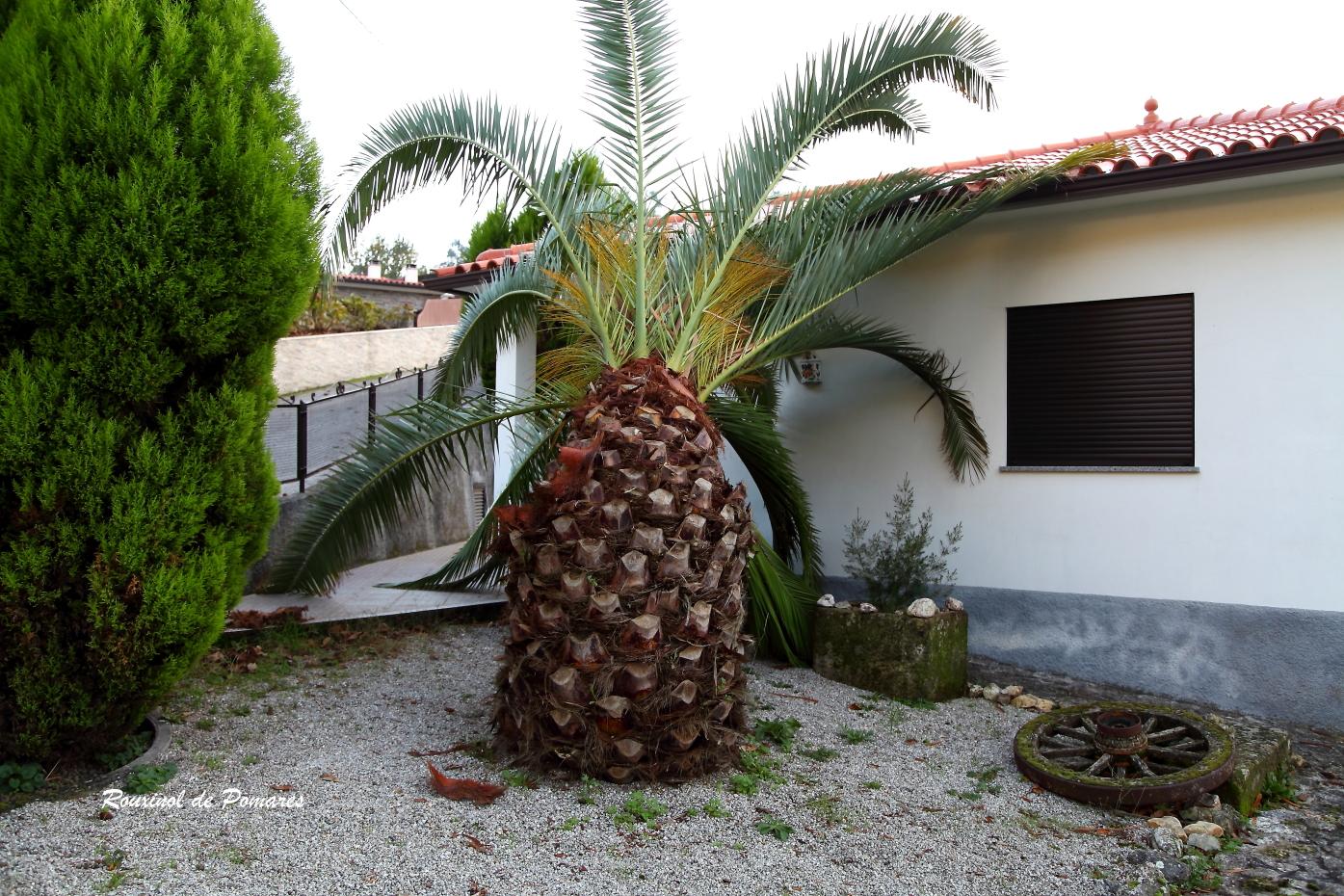 A Morte de Uma Palmeira (3)