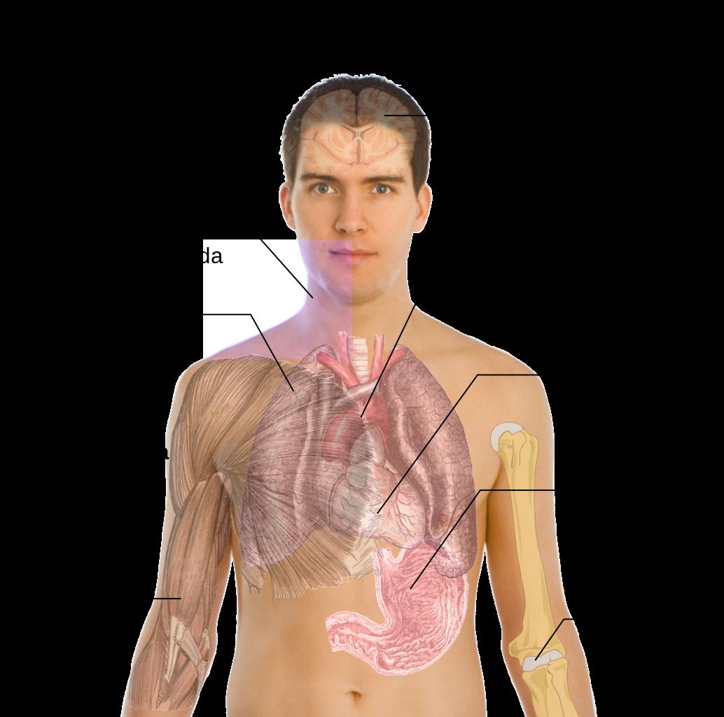 Sintomas_da_pneumonia