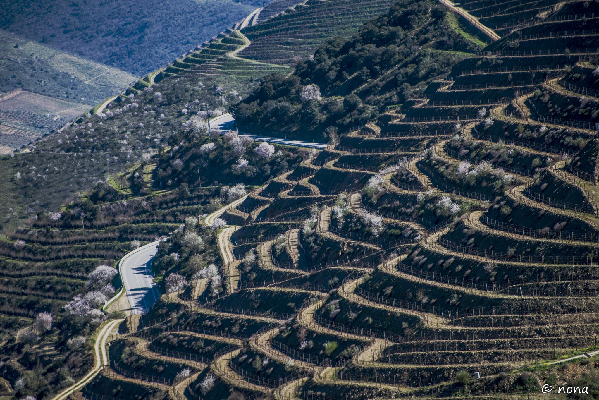 2015 - Rota das Amendoeiras (315).jpg