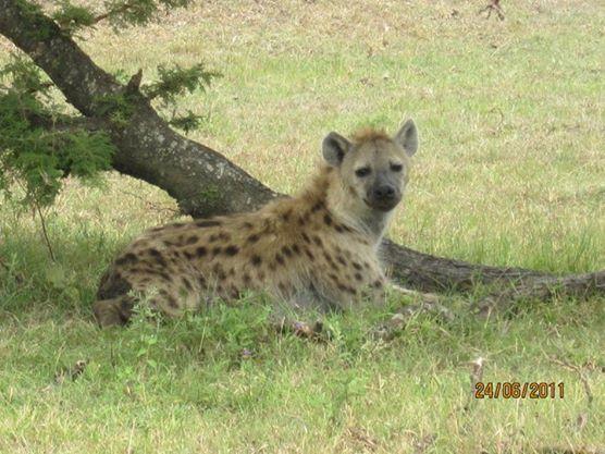 Massai Mara-Kenya
