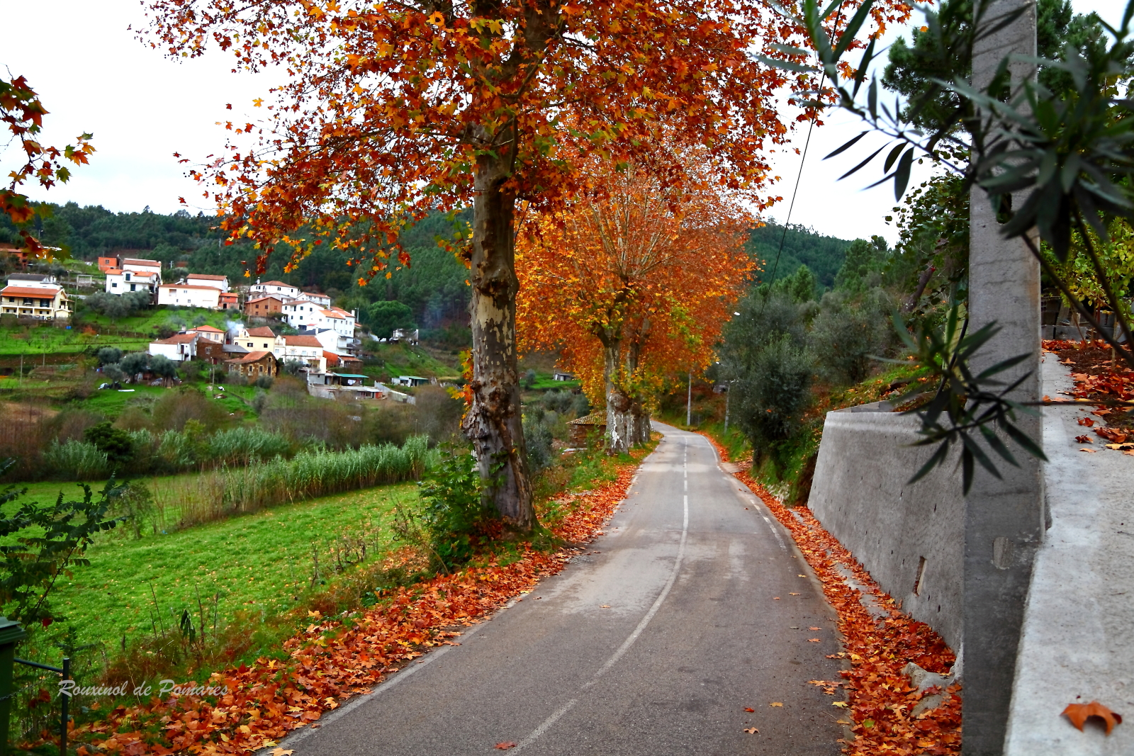 Outono em Pomares II