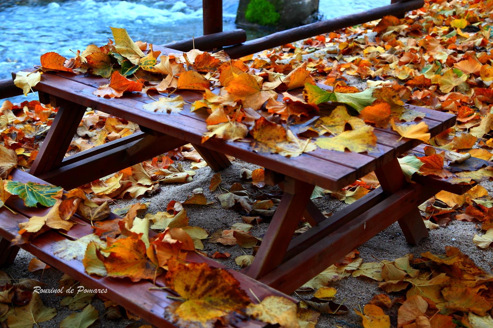 Outono em Pomares I (3)