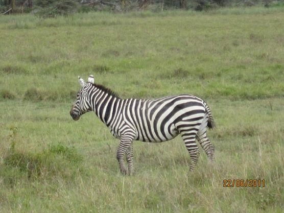 Nakuru Park-Kenya